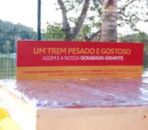 Festival Mineiro de Doces promove união de produtores locais